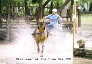 Strausser at Live Oak